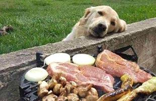 是不是你看到美食时候的样子