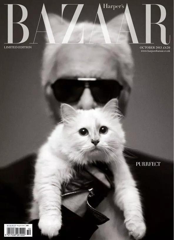 大型吸猫现场 | 时尚圈不仅爱鞋爱包还爱猫!