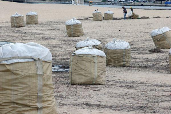 """台风""""苏力""""过境韩国 东海岸垃圾堆积高达90吨"""