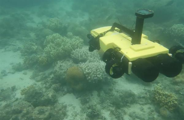 为拯救大堡礁的珊瑚群 澳大利亚出动灭杀海星的水下无人机