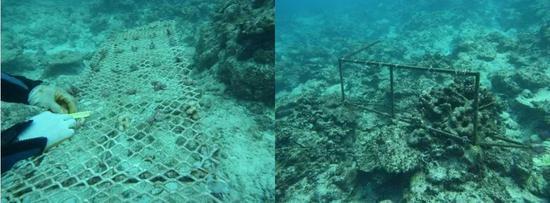 铁架做成的珊瑚苗圃(左)与台风过后被破坏的铁架(右)(图片来源:中国科学院南海研究所)