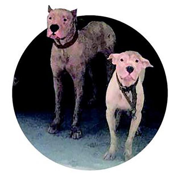 老婆婆凌晨拾荒被4条恶犬撕咬 治疗费或需25万