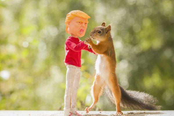 """摄影师打造逗趣场景 拍摄""""特朗普""""与松鼠互动日常"""
