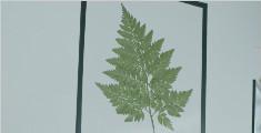 学做植物相框,让房间充满季节感的方法