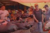残忍!印尼市场摊贩忽视禁令肆意棒杀烧烤猫狗