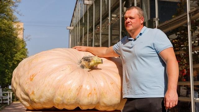 """""""战斗民族""""的蔬菜!俄最大南瓜重达645.5公斤"""