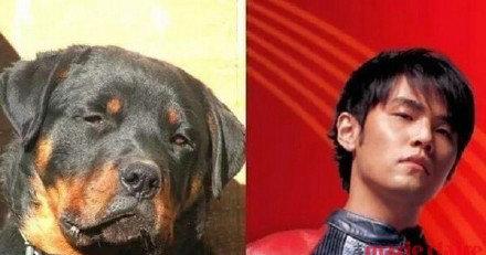 与狗狗撞脸的明星 张艺兴性格上也相似