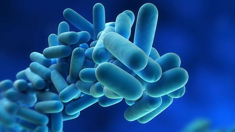 顶级期刊发文:益生菌基本无益、可能还有害