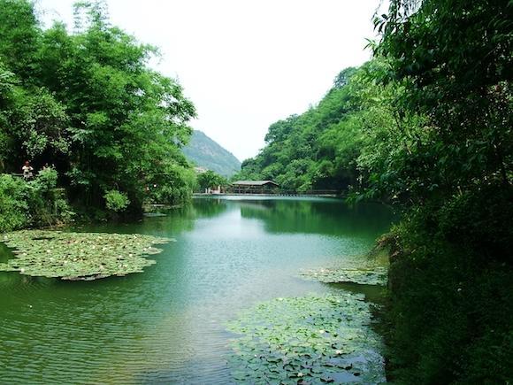 鼓了茶农腰包甜了游客笑容 小茶叶带动永川全域旅游发展