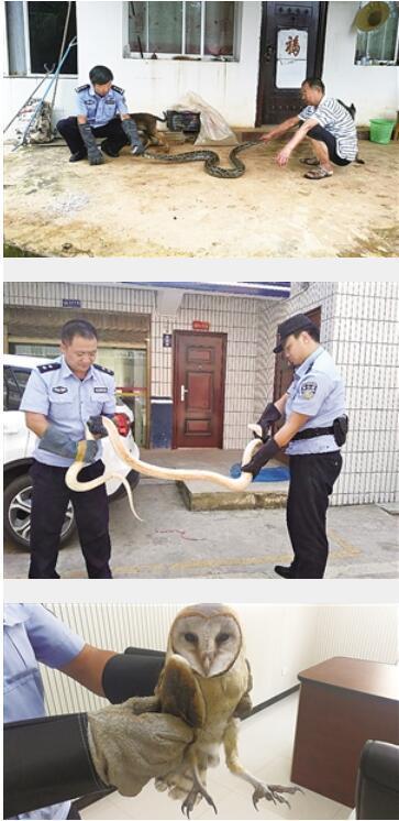 村民自掏8千元救蟒蛇 警察:动机虽好但违反法律