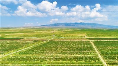 """葡萄酒产业已成为宁夏的一张""""紫色名片"""""""