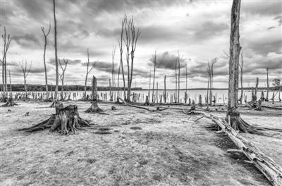 专家:气候变暖或急剧改变全球生态系统