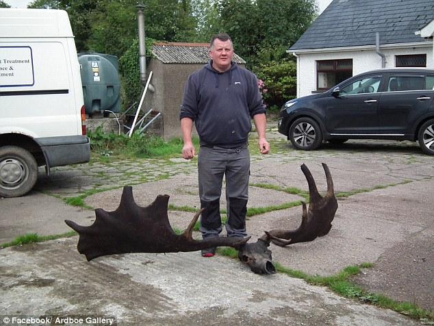 渔民捞到1万多年前巨型爱尔兰麋鹿头颅 直径1.8米