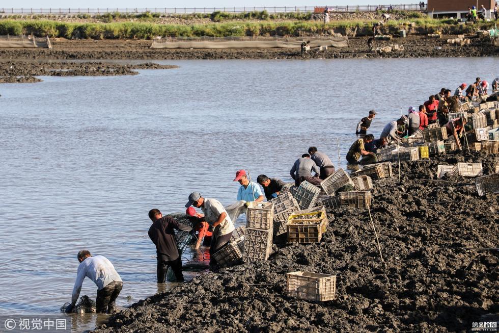 辽宁千人挖蛏 60岁农民日挖近300斤月入过万