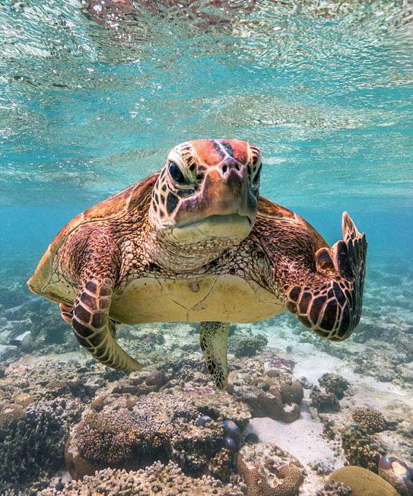"""太皮了!澳调皮海龟对潜水爱好者""""竖中指"""""""