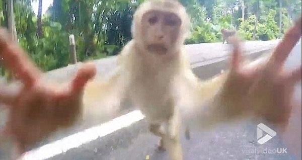 调皮!泰景区一猕猴试图抢游客相机引热议