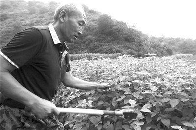 种植新优品种 调出农业新路