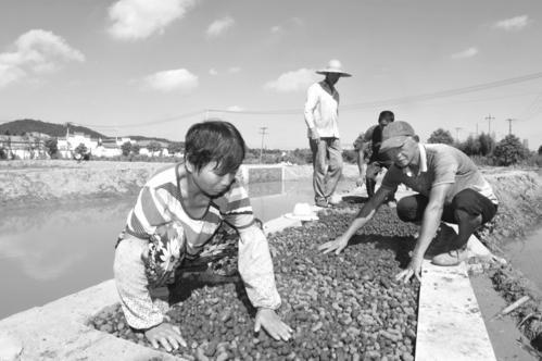 浙江推进鱼塘生物净水功能建设 规范养殖尾水生态净化