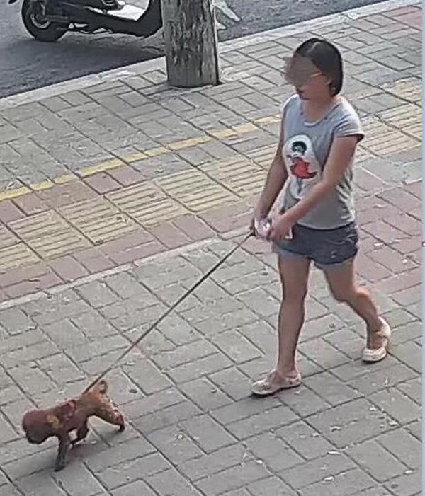 郑州1岁女童被狗咬伤鼻子后狗主人溜了,女童父母悬赏寻人