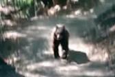 摄影师野外游玩遇熊镇定拍摄 妻子吓得浑身发抖