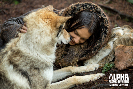 《阿尔法:狼伴归途》年度最佳亲子电影励志催泪