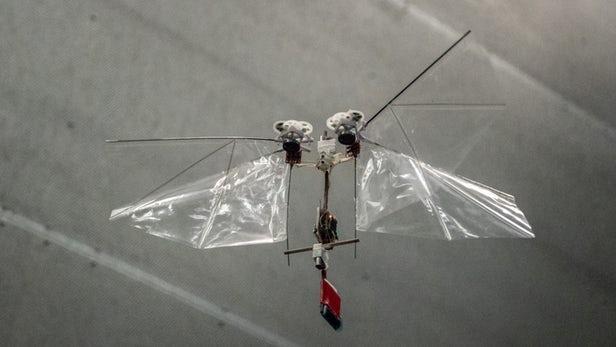 荷兰团队研制动作机敏扑翼机器人DelFly Nimble