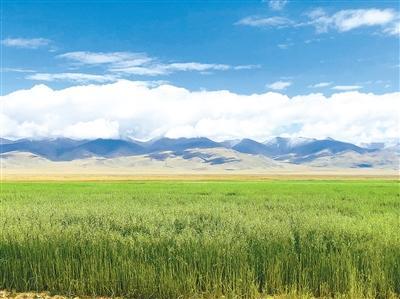 我省草原重大生态工程建设进展顺利 工程总投资10.16亿元,预计9月底全面完成建设任务