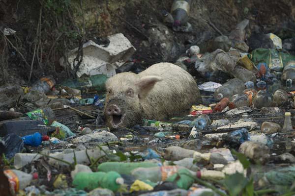 """世界地球清洁日 你随手丢下的垃圾可能是动物""""死亡陷阱"""""""