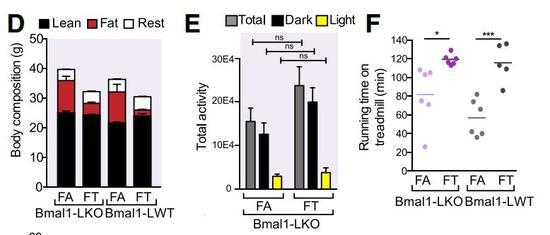SALK研究所发现限制进食时间可预防代谢疾病