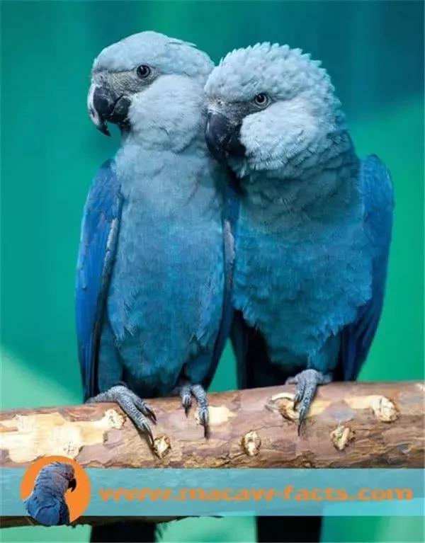 金克斯全身_天呐……动画片里的这只小蓝鸟,灭绝了!_国际新闻_环球网