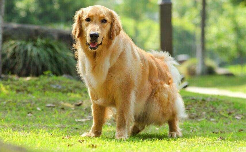 宠物犬伤人事件频发,管理权限仍说不清:不文明养犬现象何时终结