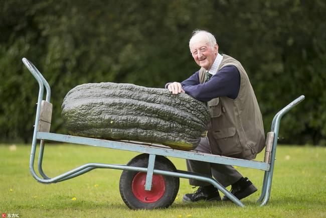 英国举办巨型蔬菜大赛 蔬菜界巨无霸重磅来袭(图)