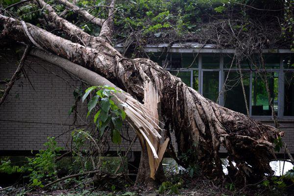 """""""山竹""""过境后 公园地砖大面积被毁 珍木被腰斩"""
