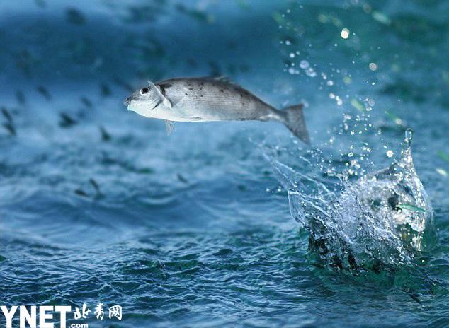 澳洲女子垂钓遭飞鱼割喉险些丧命