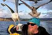有爱!挪威船长航行遇海鸥 举杯请其喝茶