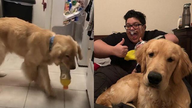 主人突遇致命低血糖 狗狗开冰箱拿运动饮料救命