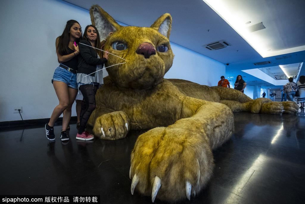 """三米长""""巨型猫""""现身巴西圣保罗 造型独特萌态中不失威严"""