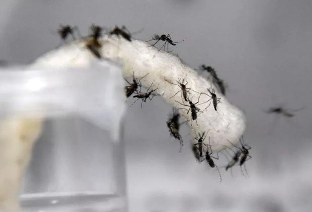 谷歌的姊妹公司用AI在新加坡对抗蚊子