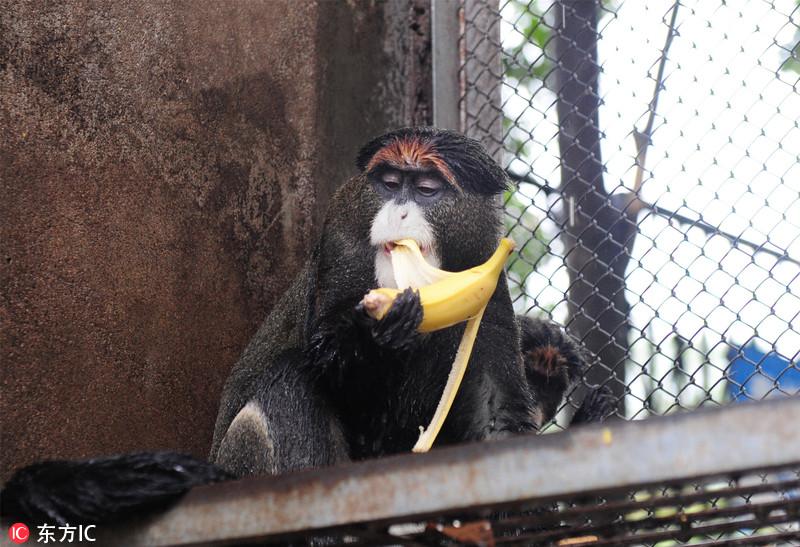 """动物们也吃上了""""月饼"""" 迎接中秋佳节"""