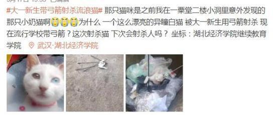 武汉大一新生带弓箭射杀流浪猫 校方:退学处理