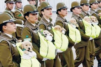 警犬宝宝参加盛大阅兵式 窝在女兵怀中登场