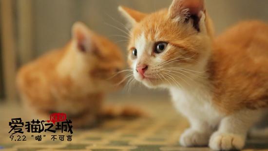 《爱猫之城》再曝推广曲MV 9月22日全国上映