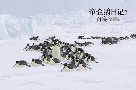 《帝企鹅日记2》将上映 原班人马呈现南极奇观