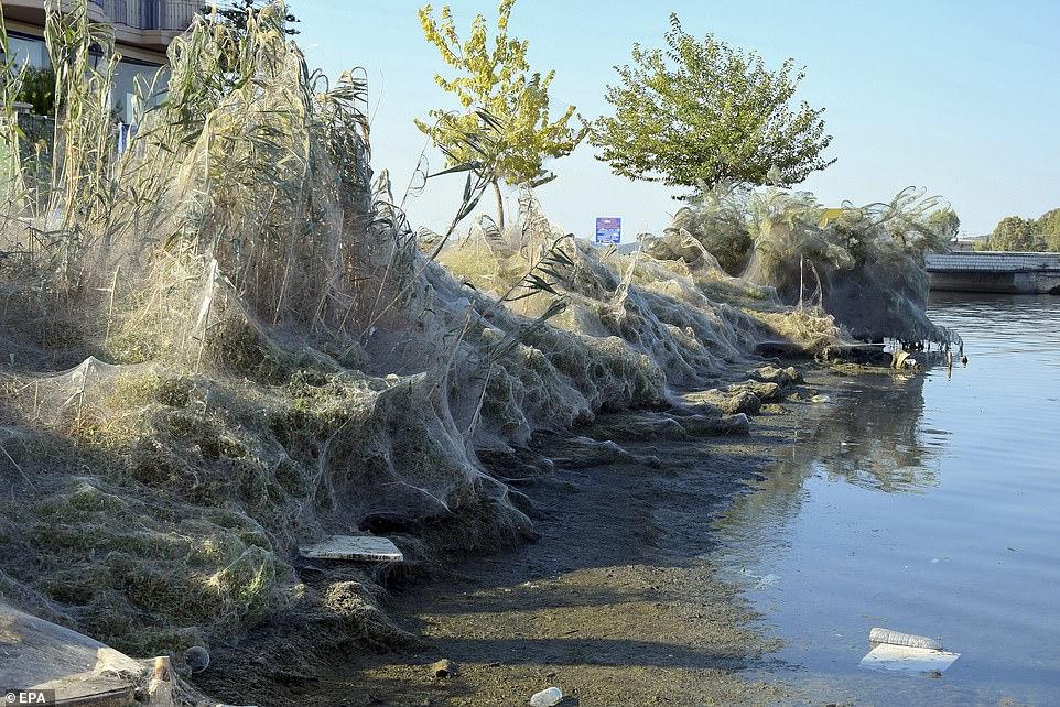 希腊小镇海岸线惊现巨型蜘蛛网 长达300米