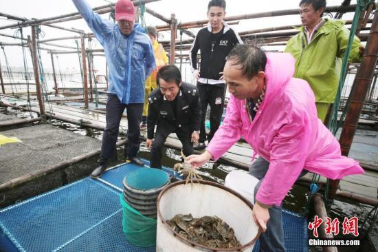 阳澄湖开湖:大闸蟹个头较往年略大 价格预计上涨