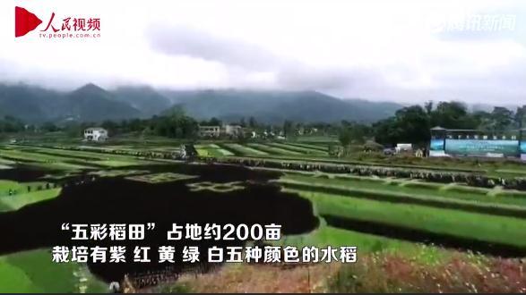 @所有人,中国农民丰收节来了!