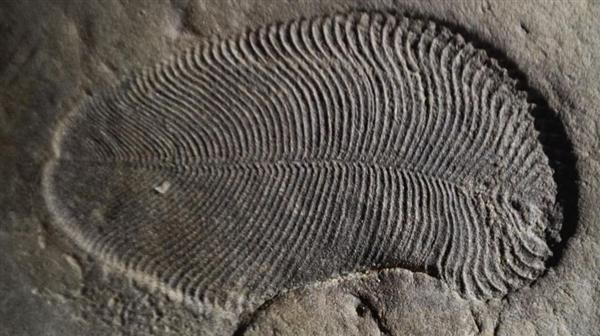 化石证明了世界上最古老的生物:生活在5.58亿年前