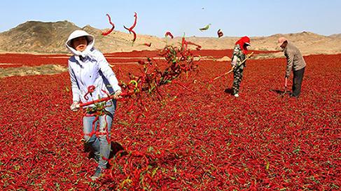 通过贸易助力打造中国农业品牌