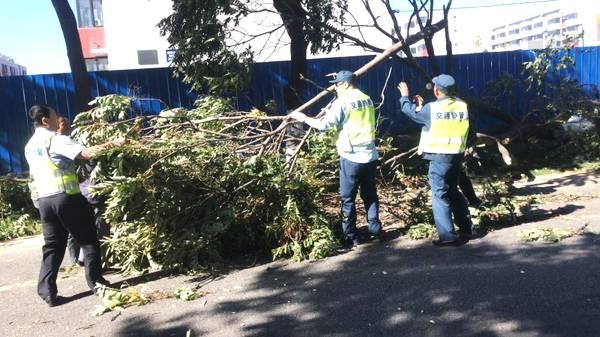 狂风吹倒大树,北京八达岭老路交通40分钟后恢复