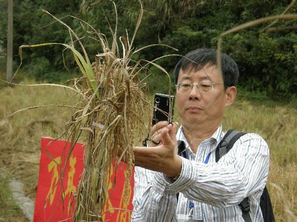 """农民丰收节:农作物中的中华文化""""密码"""""""